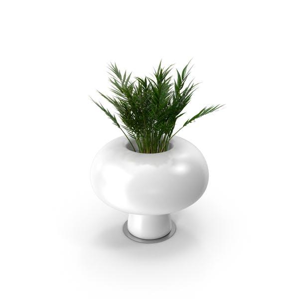 Ваза Бойо с растением