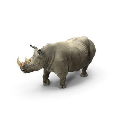 Rhino Adult Standing Pose
