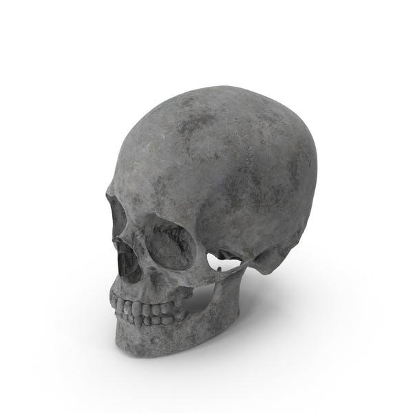 Thumbnail for Concrete Skull