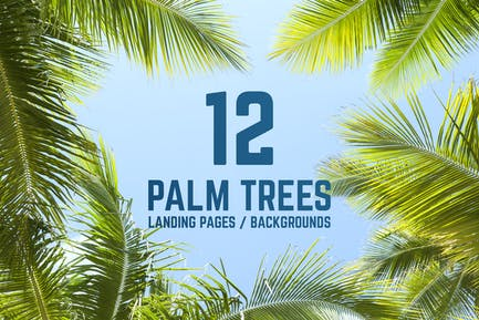 12 Palm Trees Against Blue Sky Backgrounds
