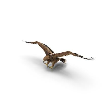 Águila imperial atacando