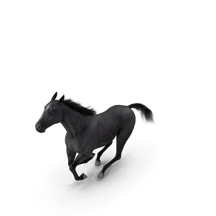 Gallop Pose Horse Fur
