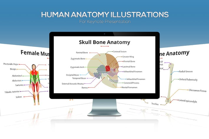 Cover Image For Biology - Human Anatomy For Keynote