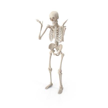 Skeleton Shrug