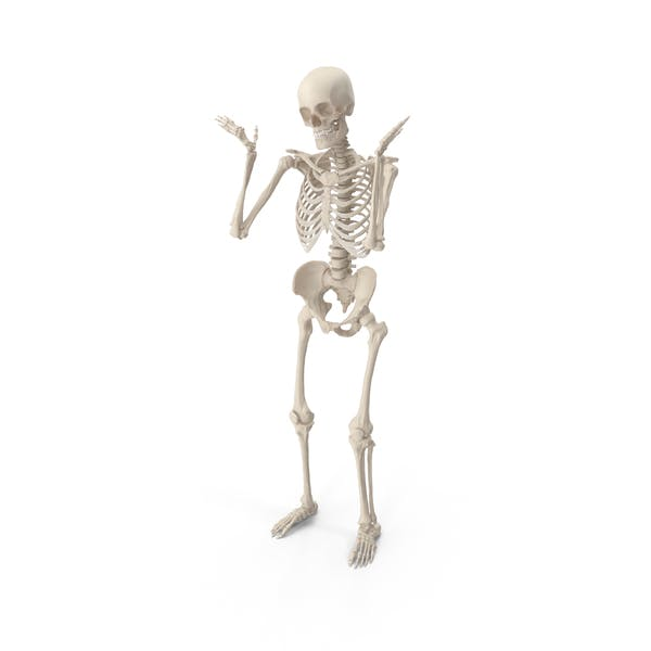 Cover Image for Skeleton Shrug