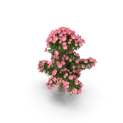 Bonsai-Baum mit Blumen