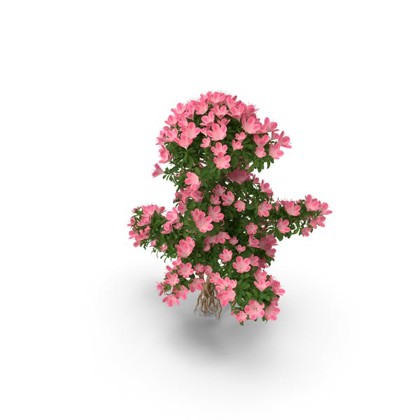 Thumbnail for Bonsai Tree with Flowers