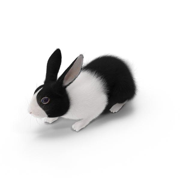 Thumbnail for Black Rabbit