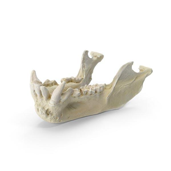 Павиан обезьяна мужская челюсть