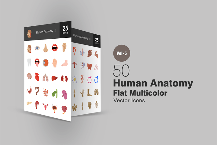 Thumbnail for 50 Human Anatomy Flat Multicolor Icons