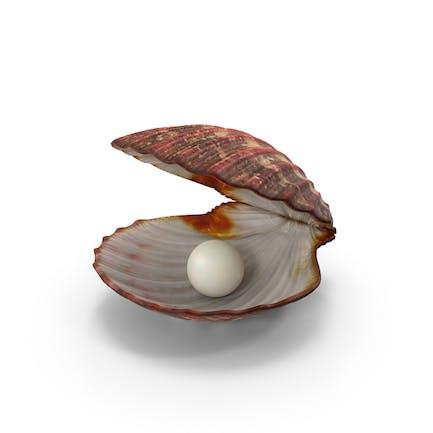 Concha de almeja con perla