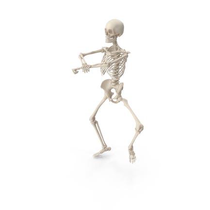 Skelett Gangnam Stil