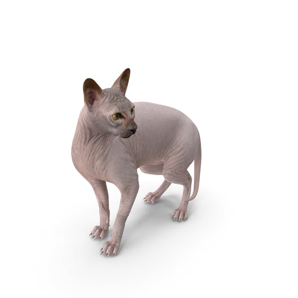Dark Solid Color Sphynx Cat
