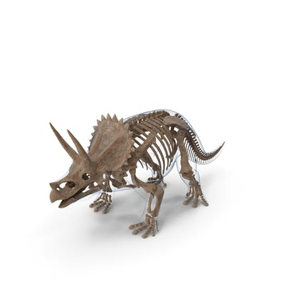 Triceratops Fossil Standing Pose with Transparent Skin