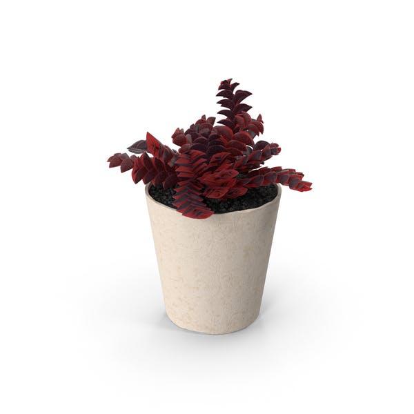 Thumbnail for Succulents