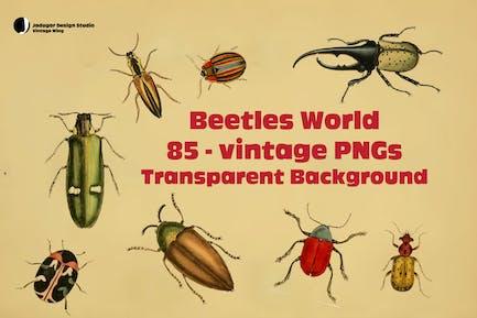 Käfer - 85Vintage PNGs