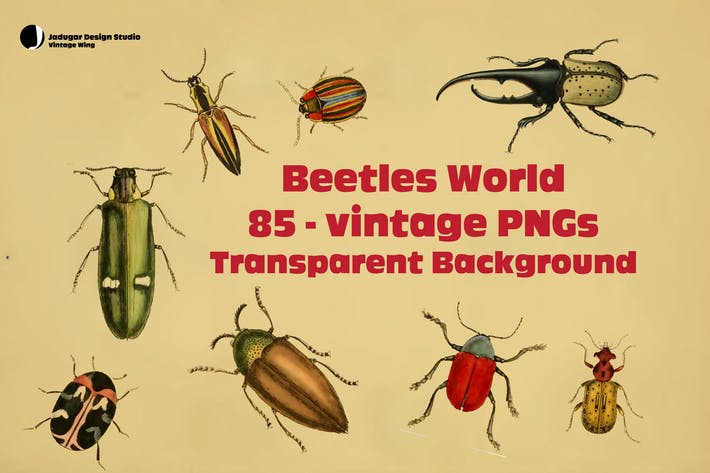 Thumbnail for Beetles- 85Vintage PNGs
