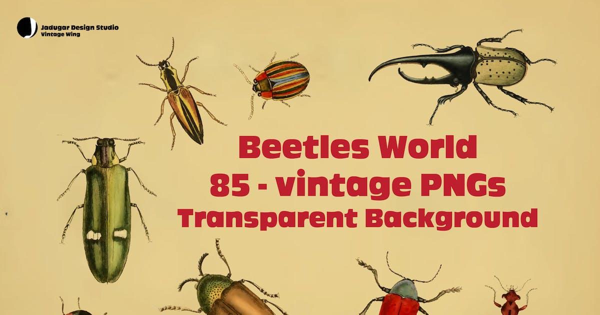 Download Beetles- 85Vintage PNGs by jadugarDS