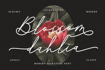 Blossom Dahlia Signature