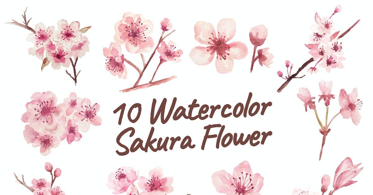 Download 10 Watercolor Sakura Flower Illustration Graphics by IanMikraz
