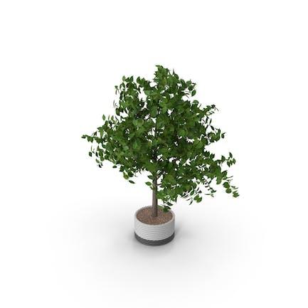 Topfpflanze