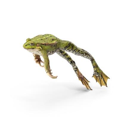 Frog Jumping Pose
