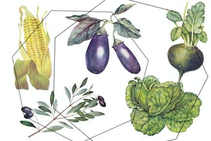 Botanical retro vegetables - vintage set
