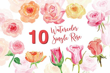 10 Watercolor Single Rose Illustration