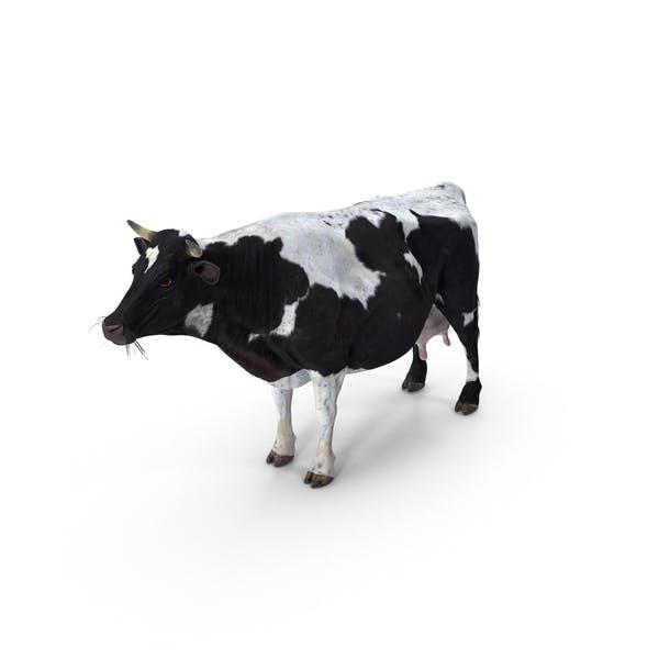 Корова пятнистая