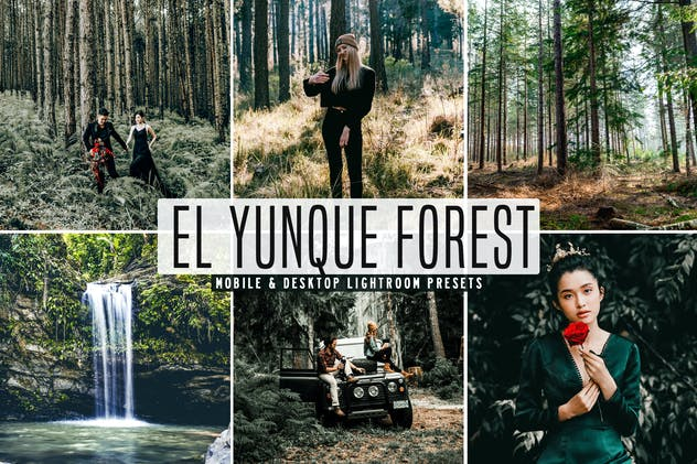 El Yunque Forest Mobile & Desktop Lightroom Preset