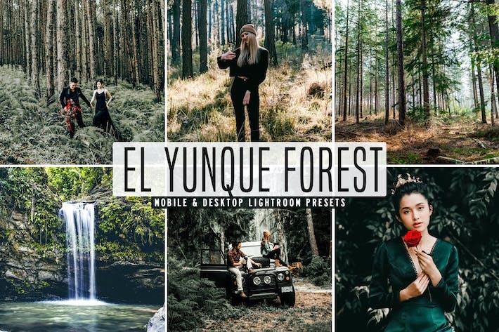 El Yunque Forest Mobile & Desktop Lightroom Preset