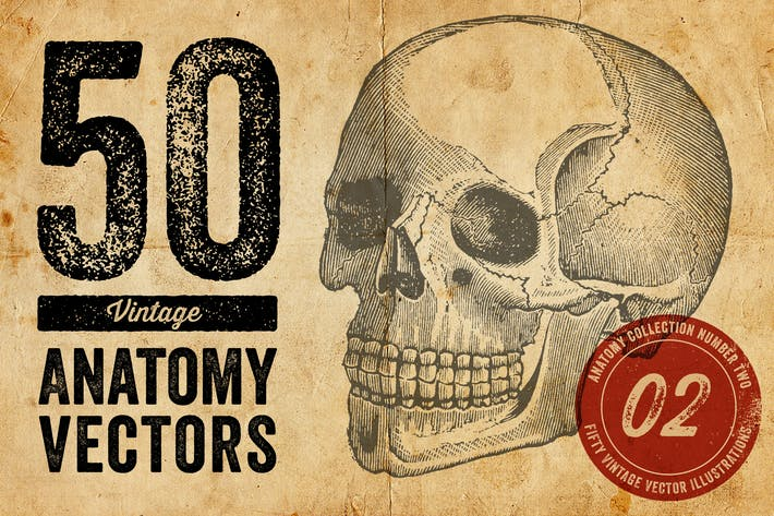 Thumbnail for Vintage Anatomy Vectors