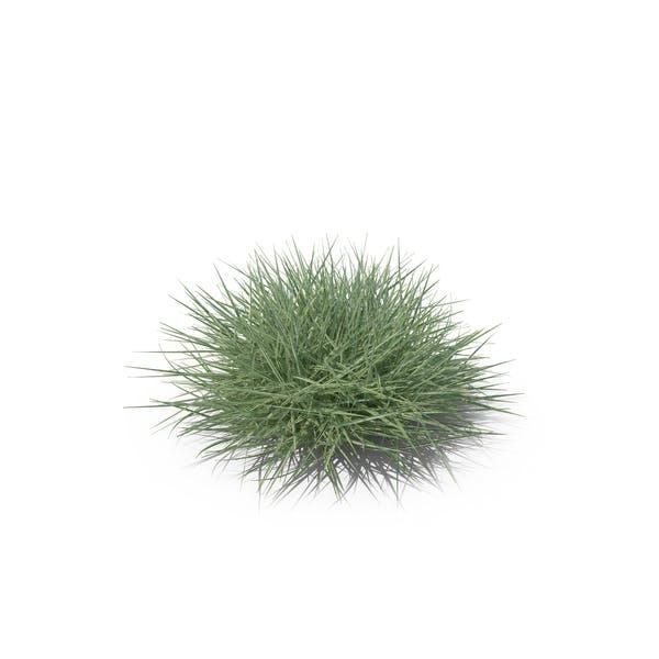 Thumbnail for Button Grass