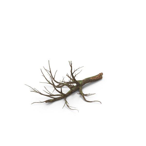Падший дуб дерево