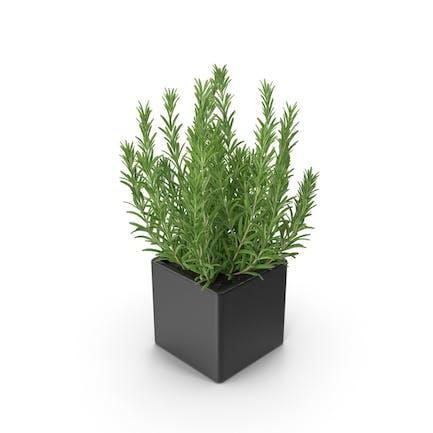 Rosemary Square Pot Black