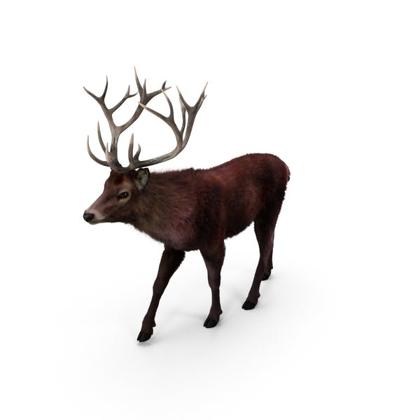 Thumbnail for Red Deer Stag