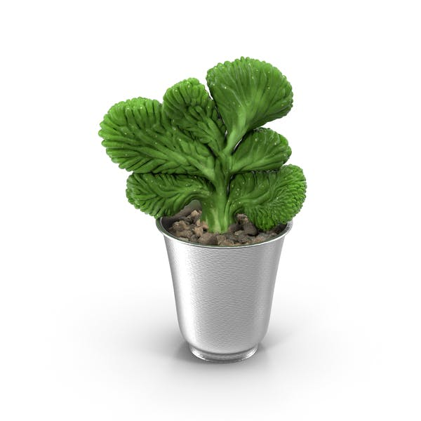 Thumbnail for Plant in Silver Planter
