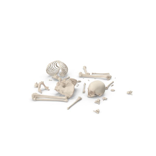 Skeleton Scattered Bones