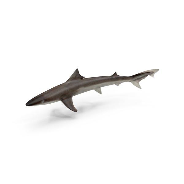 Школьная акула