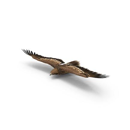 Deslizamiento de águila imperial