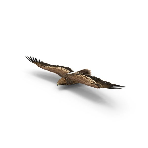 Thumbnail for Imperial Eagle Gliding