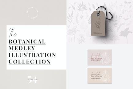 Botanical Medley Collection