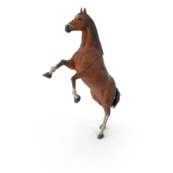 Thumbnail for Horse