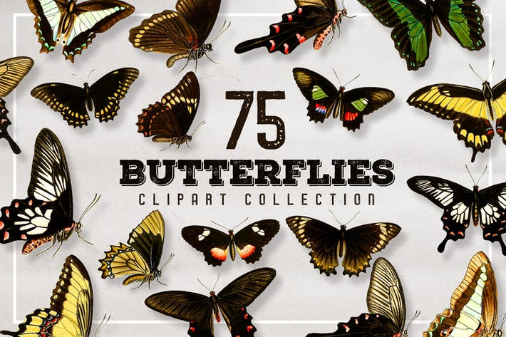 Thumbnail for 75 Vintage Butterfly Graphics