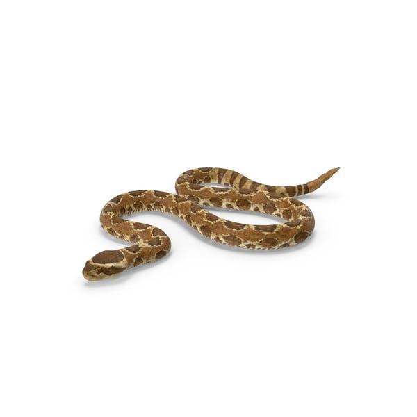 Rattlesnake Crawling