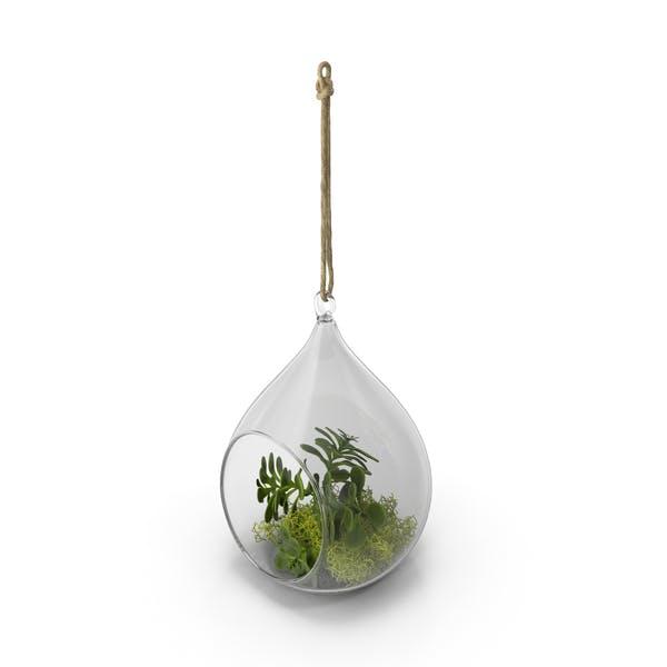Cover Image for Hanging Terrarium