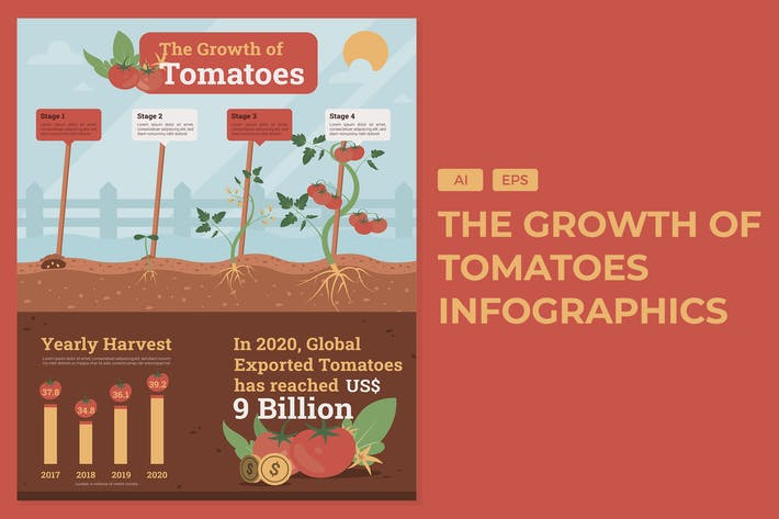 The Growth Of Tomatoes - Agriculture Infographics