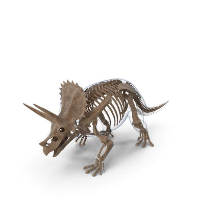 Triceratops Fossil Walking Pose con piel transparente