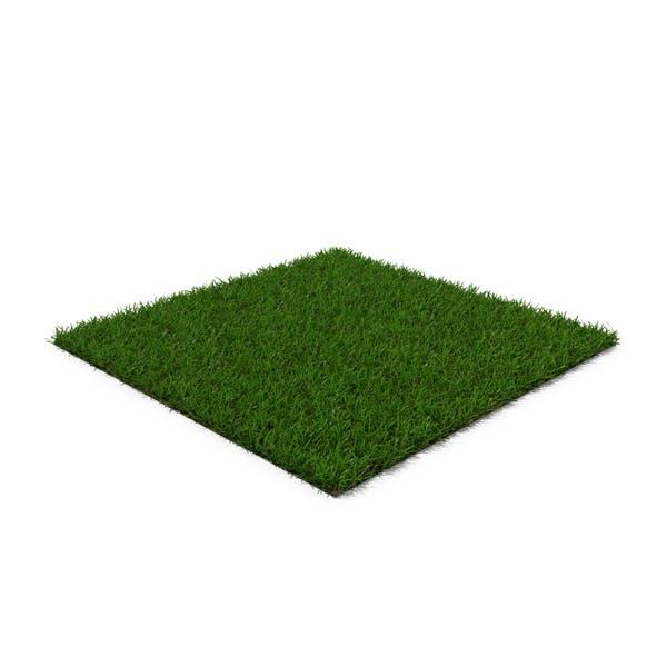 Thumbnail for Centipede Warm Season Grass