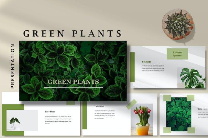 Thumbnail for Зеленые растения - Природа Google слайды